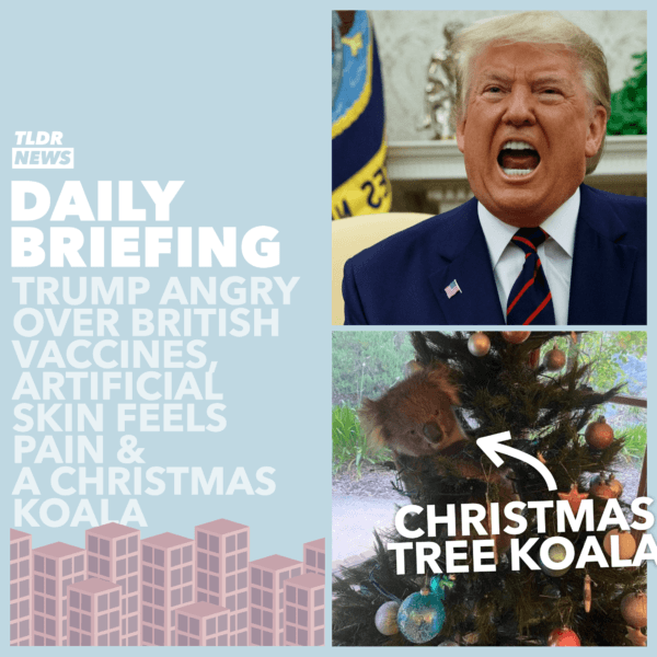 December 03: Presidential Fury, Artificial Skin, and a Christmas Koala